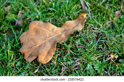 aging autumn leaves in green grass