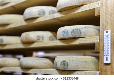 Aging Cheese on wooden shelves in the maturing cellar in Franche Comte creamery in France