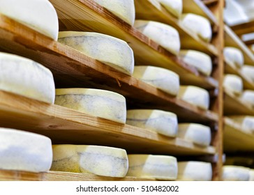 Aging Gruyere de Comte Cheese on wooden shelves at maturing cellar of Franche Comte creamery in France