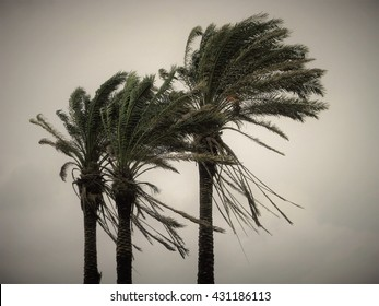 Agitated fronds of plam trees