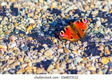 aglais io or peacock butterfly on rough surface