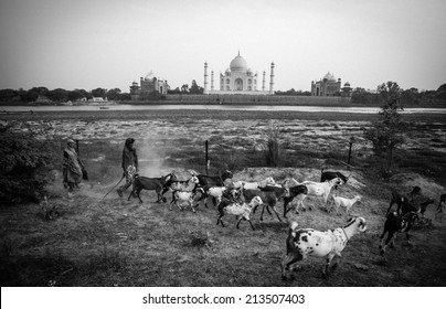 AGRA, INDIA - APRIL 12: Unidentified people with goats walking at the riverside at Taj Mahal on Apr 12, 2014 in Agra, India.
