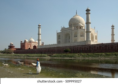 AGRA, INDIA - MARCH 05, 2006: Woman with goats and view the Taj Mahal from the Yamuna river