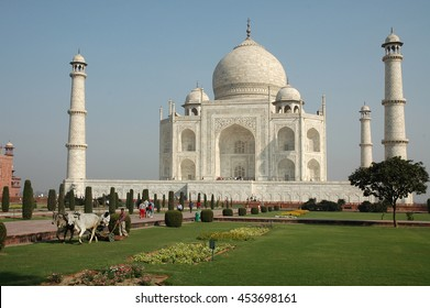 AGRA, INDIA - MARCH 07, 2006: Landscapers mowing the gardens of the Taj Mahal, with a team of cows