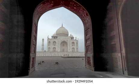 AGRA, INDIA - MARCH, 26, 2019: early morning view of the taj mahal, framed by an arch, with monkeys walking past at agra, india