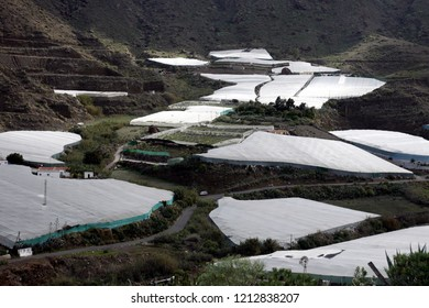 Agraculture fields in theVvillage of  San Nicolas on The Gran Canary Island on the Canary Island of Spain in the Atlantic Ocean.   Gran Canary, San Nicolas, February, 2006
