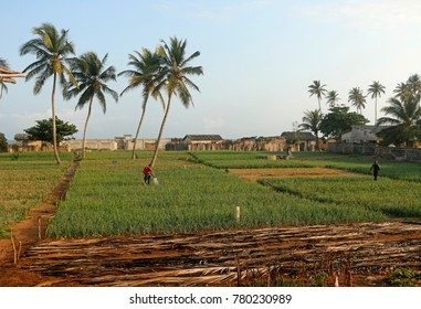 Agri cultural landscape at Grand Popo, Benin