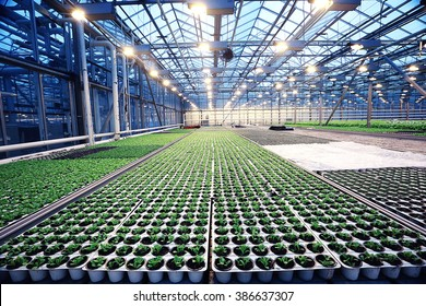 agribusiness greenhouse seedling spring