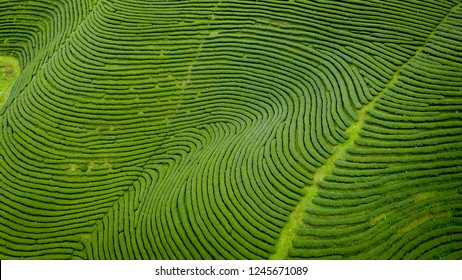 agricultural area farmland of green tea planter on the mountain chiang rai thailand aerial view from drone