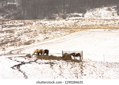 Agricultural background of horses eating hay on a snow-covered hillside in Appalachia