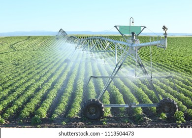 An agricultural center pivot sprinkler used to irrigate rows of potatoes in the fertile farm fields of Idaho.