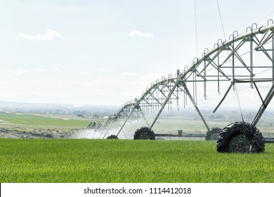 An agricultural center pivot sprinkler used to irrigate a wheat field in the fertile farm fields of Idaho.
