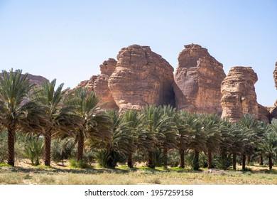 "Agricultural date palm farm in dry semi-desert of ""Al Ola"" Al Ula, Saudi Arabia. Al Ola is Part of Madinah Province in Western of Kingdom of Saudi Arabia"