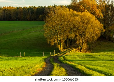 agricultural dirt road into european autumn forest in golden evening sunset light with beautiful autumnal colours