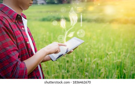 Agricultural engineering innovation modern technology Asian man farmer using tablet smart hologram touch screen program tracking diagnosing checking on plants health, rice field mountain background