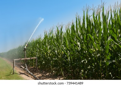 Agricultural equipment. Equipment pumping water on field of corn.Water sprinkler