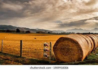 Agricultural farmland  country around Geraldine, Canterbury featuring a long line of hay straw bales and sheep