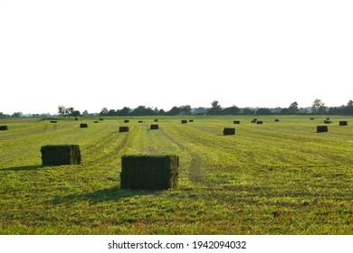Agricultural farmland and hay bails
