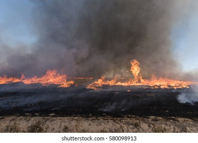 Agricultural field burn of wheat stubble with ash fire and smoke