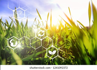 Agricultural field in a clear sunny day. High technologies and innovations in agro-industry. Study quality of soil and crop. Profit and investment growth. Implementation of technological solutions.
