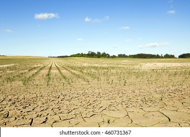 Agricultural field and  the cracked earth