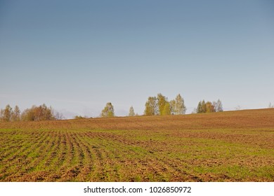 Agricultural field with germination young sprouts of plants, on a moist land, vibrant colors at morning. Arable land in the spring, ready for sowing season. Landscape countryside, blue sky and forest