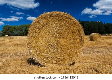 agricultural field with haystacks after harvesting rye, from rye there were Golden haystacks of prickly straw, haystacks of rye straw, closeup