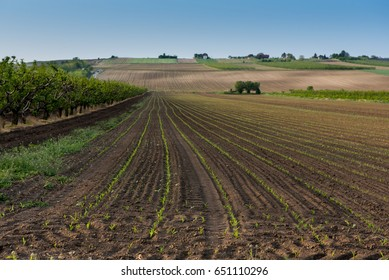 Agricultural field landscape