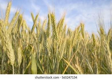 agricultural field, nature and agriculture farming series