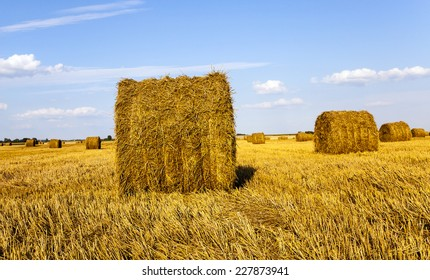 an agricultural field on which grow up also the harvest  wheat