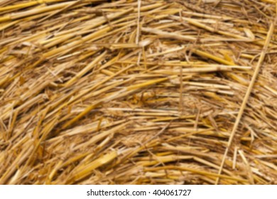 an agricultural field on which are laid out straw Haystacks after collecting grass, wheat, defocused