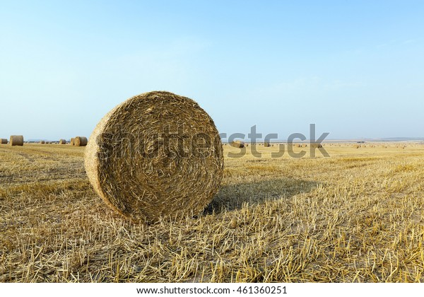 Agricultural field on which wheat crop harvested in the summer