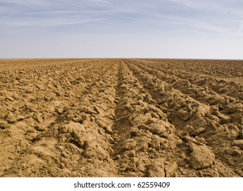 Agricultural field with parallel rows