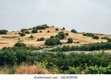 Agricultural field surrounded by dry land in Golan Heights, Israel.