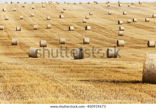 agricultural field where crops harvested wheat, summer,