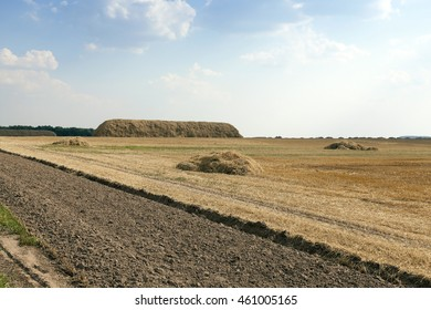 agricultural field where harvesting is carried out cereal, Belarus, summer