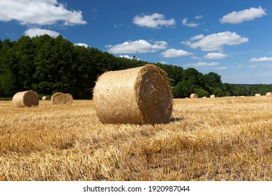 agricultural field where wheat straw is collected in stacks for use in farmers activities and agricultural enterprises, golden wheat straw is dry and prickly, in field