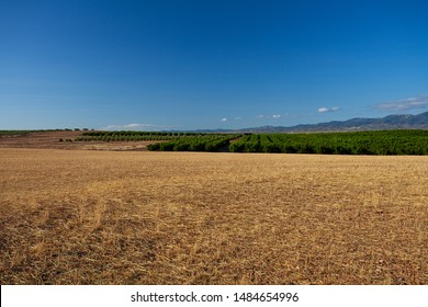 agricultural field with yellowing grass