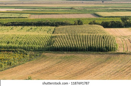 Agricultural fields ripening at season