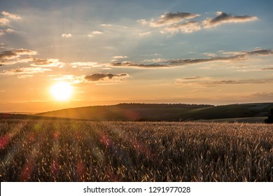 Agricultural fields at sunset