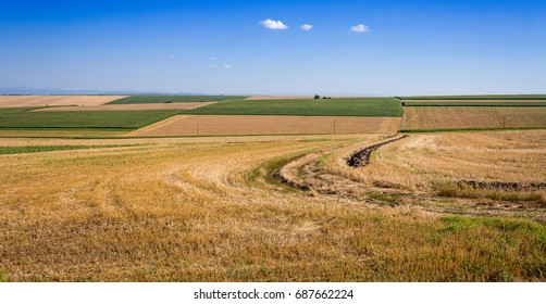Agricultural geometric landscape with road, grain crops, soy, and corn against a blue sky background with white clouds