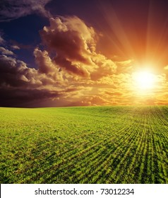 agricultural green field and good red sunset