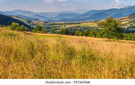 agricultural hay field in mountains. tree on the grassy meadow. beautiful rural landscape