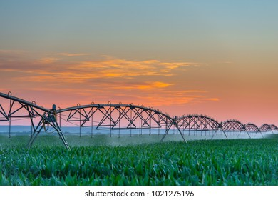 Agricultural irrigation in corn field