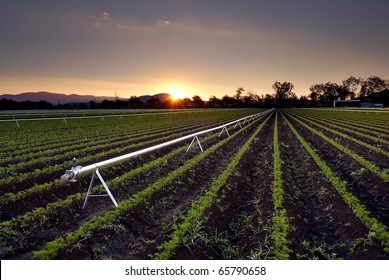 Agricultural Irrigation Sprinkler - Rural Farm Scene An agricultural irrigation and watering sprinkler system with young crop growth, as shot at sunset in South East QLD, Australia