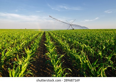 Agricultural irrigation system watering corn field on sunny summer day.