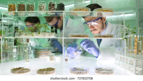 Agricultural Lab Team of Researchers Men Doing Biological Research on Genetically Modified Plant Seeds in Agriculture Chemistry Laboratory