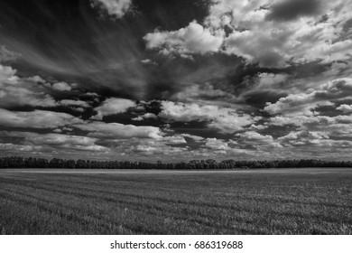 Agricultural land in summer after harvest