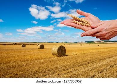 agricultural landscape afrer harvest