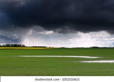 Agricultural landscape after rain.